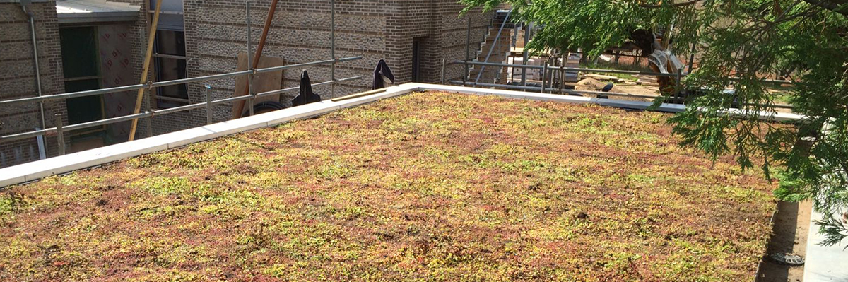 Green Roofing Cambridgeshire