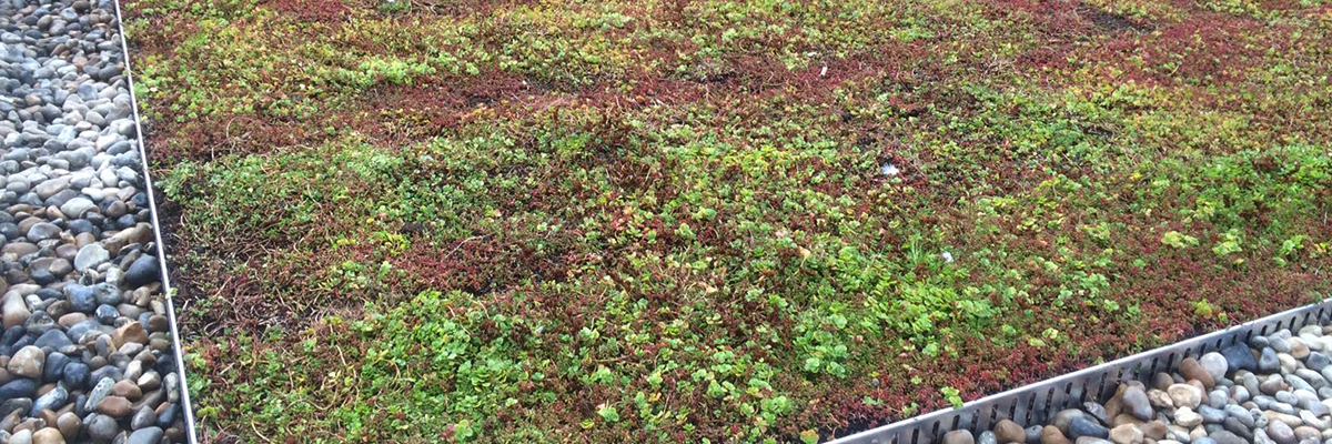 Green Roofs Cambridgeshire